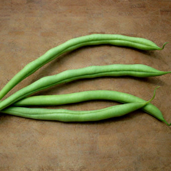 Bush Snap Bean, Cupidon (Organic)