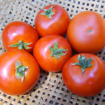 Tomato, Forest Fire (Organic)