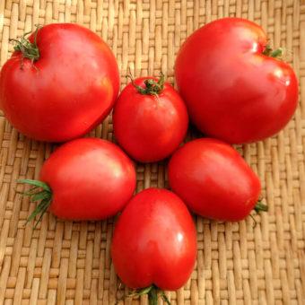 Tomato, Maria Nagy Heart (Organic)