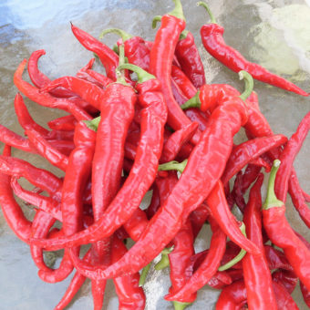 Maria Nagy's Transylvanian Hot Pepper