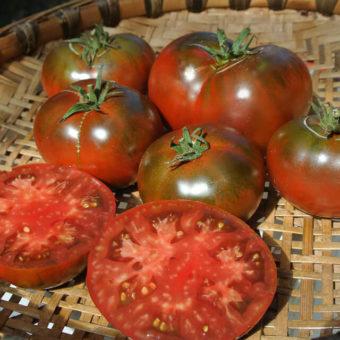 Tomato, Paul Robeson (Organic)