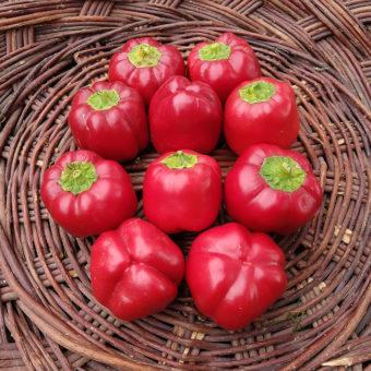 Sweet Pepper, Sunnybrook Pimento (Organic)