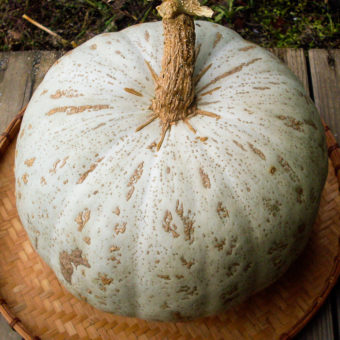 Winter Squash, Sweet Meat – Oregon Homestead (Organic)