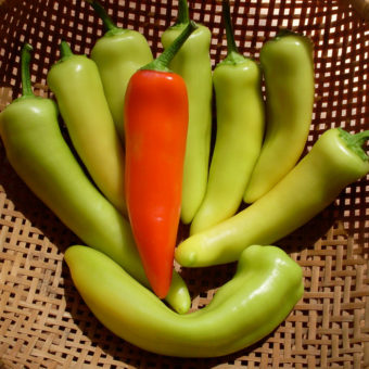 Hot Pepper, Gabi Hot Wax (Organic)