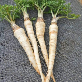 Parsley Root, Hilmar (Organic)