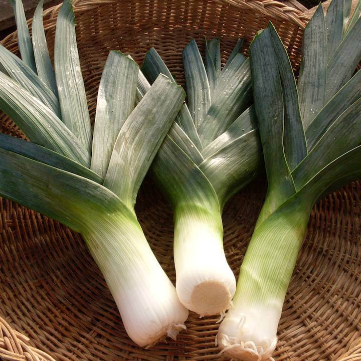 Leek, Mechelen Blue Green Winter (Organic)