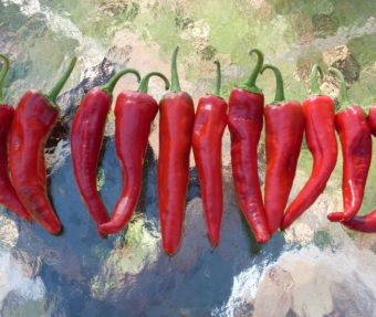 Hot Pepper, Chimayo