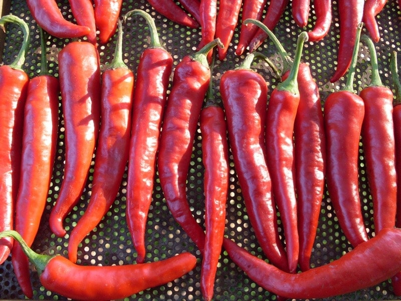 Hot Pepper, Korean (Organic)