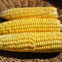 Sweet Corn, New Mama Super Sweet (Organic)