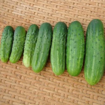 Cucumber, Addis Pickle (Organic)