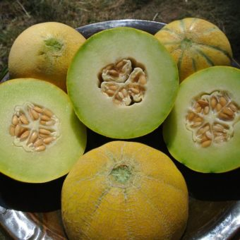 Melon, Farthest North Galia (Organic)