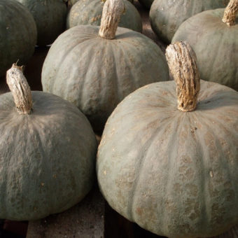 Winter Squash, Blue Kuri (Organic)