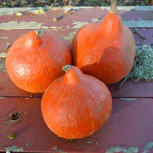 Winter Squash, Little Gem Red Kuri
