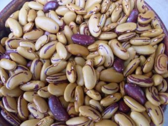 Bush Dry Bean, Tiger's Eye (Organic)