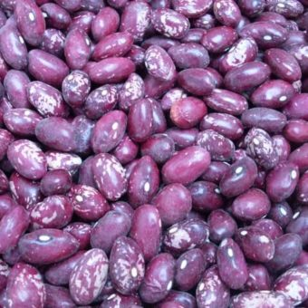 Bush Dry Bean, Whipple (Organic)