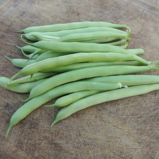 Bush Snap Bean, Saxa (Organic)
