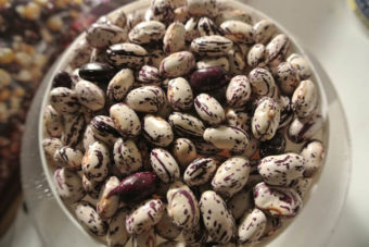 Pole Dry Bean, Khabarovsk (Organic)