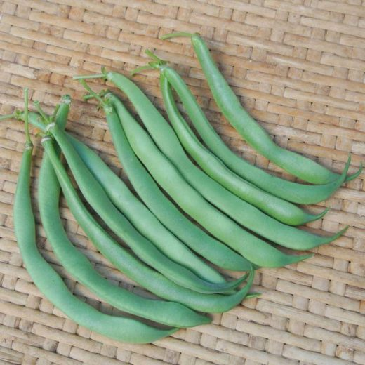 Bush Snap Bean, Alice Sunshine (Organic)