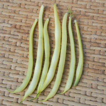 Bush Snap Bean, Hildora (Organic)