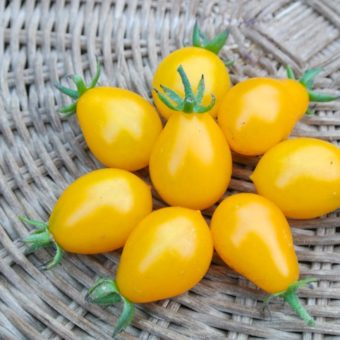 Tomato, Polen Yellow Pear (Organic)