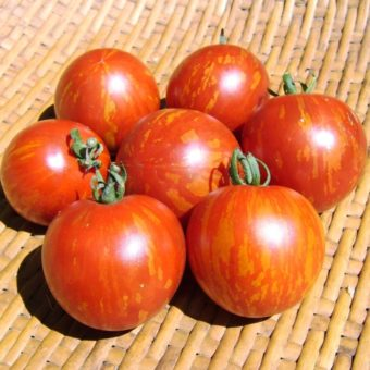 Tomato, Darby Red & Yellow (Organic)