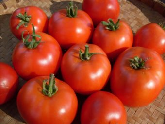 Tomato, Early Willamette (Organic)