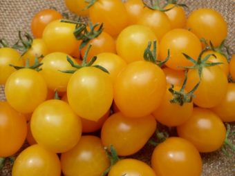 Tomato, Estonian Yellow Cherry