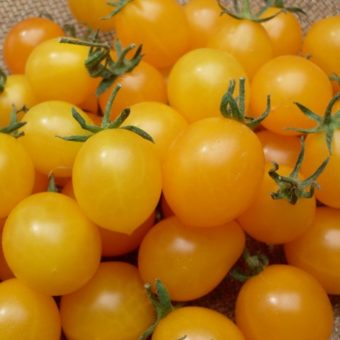 Tomato, Estonian Yellow Cherry (Organic)