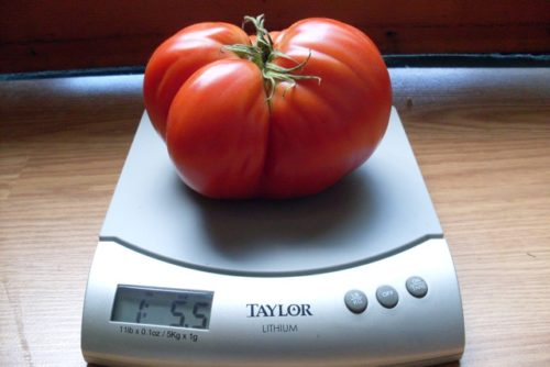 Tomato, Giant of Siebenburgen