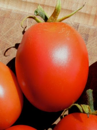 Tomato, Graham's Good Keeper (Organic)