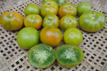 Tomato, Lime Green Salad (Organic)