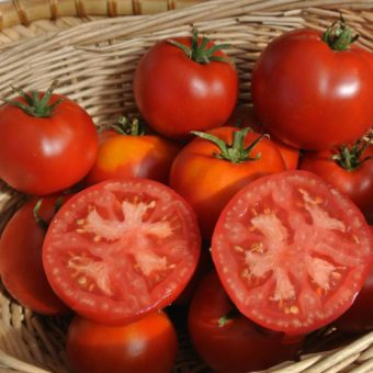 Tomato, Gill's All Purpose (Organic)