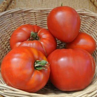 Tomato, Jory (Organic)