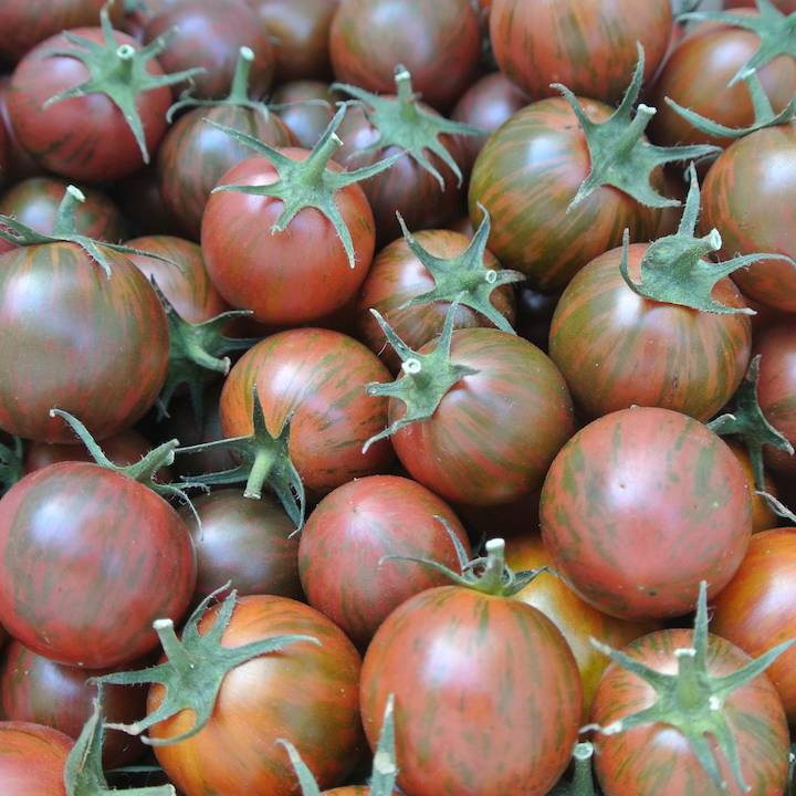 Tomato, Purple Bumble Bee (Organic)