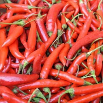 Hot Pepper, Adaptive Early Thai Grex (Organic)