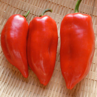 Sweet Pepper, Pointy Kaibi #1 (Organic)