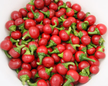 Szentesi Cherry Pepper