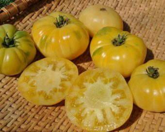 Organic White Tomesol Tomato