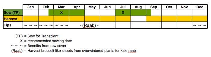 Kale, Bear Necessities (Organic)