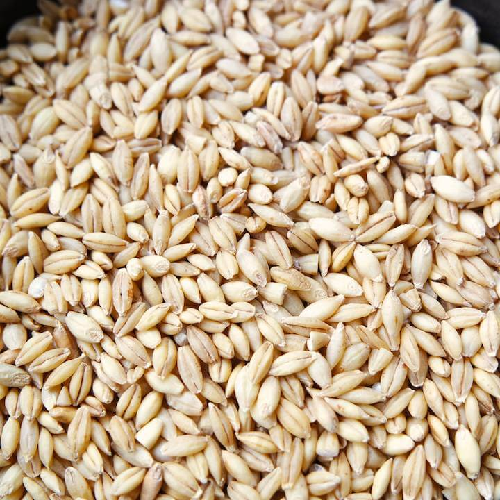 Barley, Lawina Hulless (Organic)