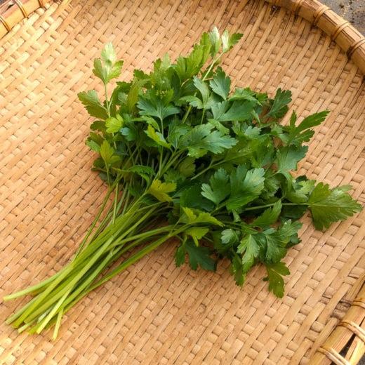 Organic Einfache Schnitt 3 Parsley Seed
