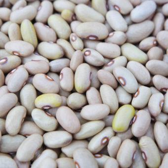 Bush Dry Bean, Beers (Organic)