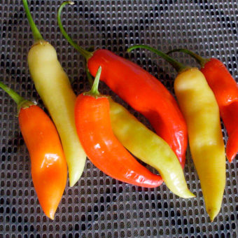 Hot Pepper, Aji Crystal (Organic)