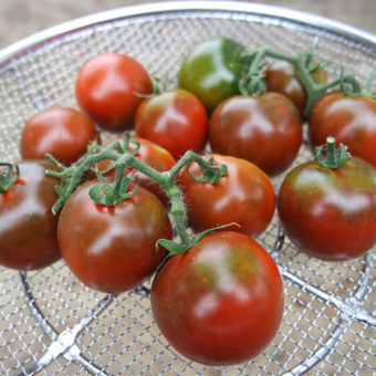 Tomato, Pigletwillie's French Black (Organic)
