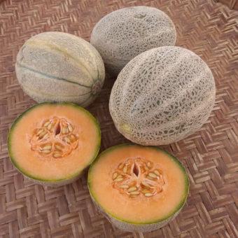 Melon, Arancino (Organic)