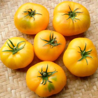 Tomato, Azoychka (Organic)