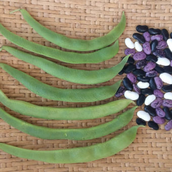 Runner Bean, British Pop (Organic)
