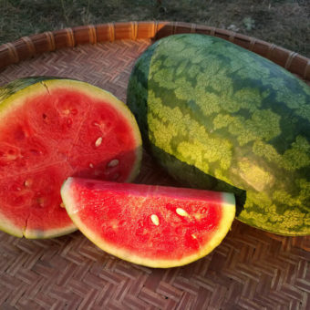 Watermelon, Nancy (Organic)