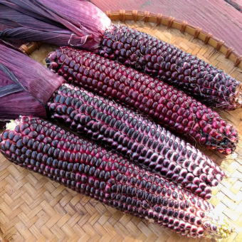 Organic Double Red Sweet Corn Seed