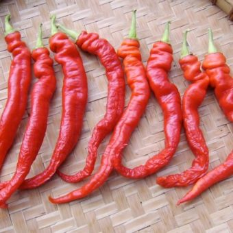 Hot Pepper, Chinese Dragon Tongue (Organic)